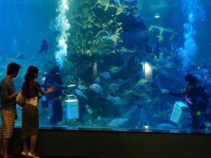 Du lịch Nha Trang - Viện Hải Dương Nha Trang
