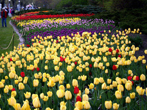 Lễ hội hoa Tulip ở Canada
