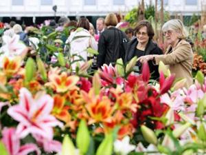 Lễ hội hoa ở Chelsea - Anh