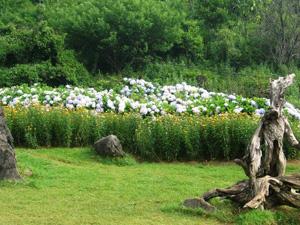 Trên núi Hàm Rồng có rất nhiều loài hoa khoe sắc, đặc biệt là hoa Lan
