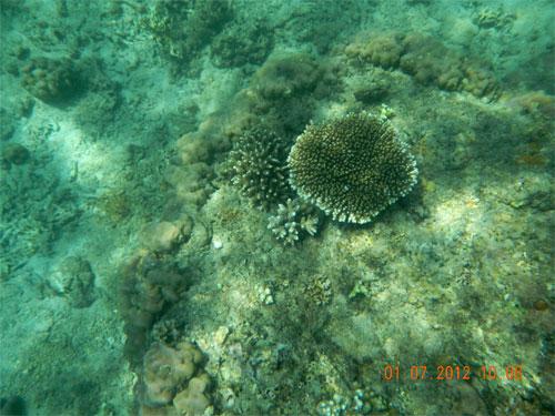 san hô đảo Bình Ba