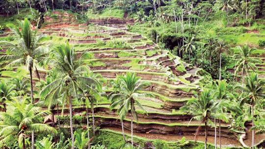 Ruộng bậc thang ở Bali - iVIVU.com