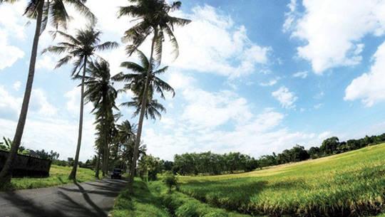 Cánh đồng lúa ở Bali - iVIVU.com