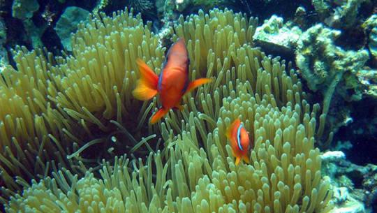 Lặn biển Nha Trang - iVIVU.com