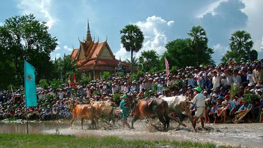 Lễ hội đua bò Bảy Núi, An Giang - iVIVU.com