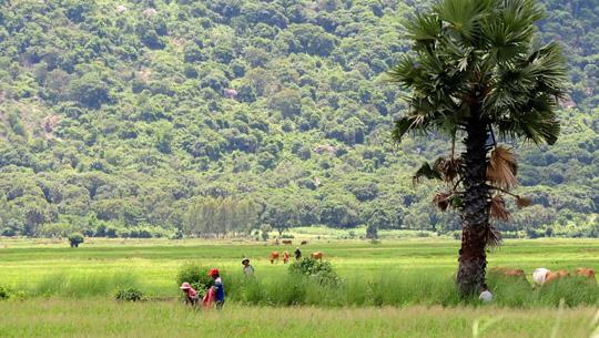 Non nước An Giang - iVIVU.com