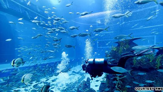 S.E.A Aquarium 1 - iVIVU.com