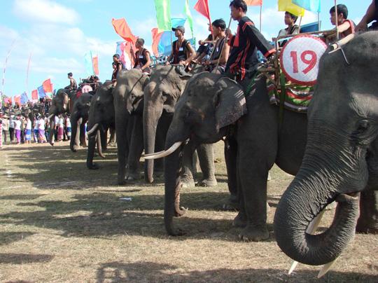 Đua voi ở Bản Đôn - iVIVU.com