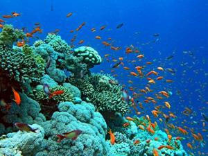 Lặn biển ngắm san hô Phú Quốc - iVIVU.com