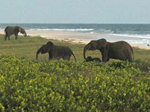 Công viên quốc gia Loango, Gabon - iVIVU.com