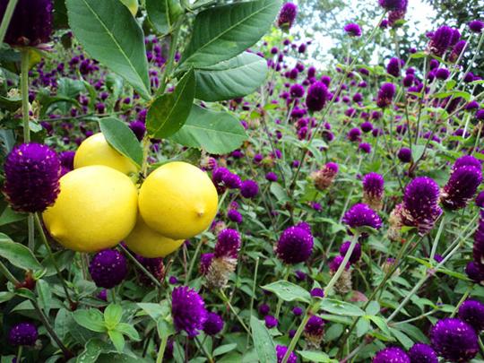 Hoa trái tươi tốt tại Dran - iVIVU.com