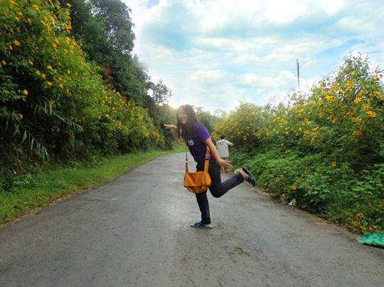 Con đường hoa dã quỳ ở Dran - iVIVU.com
