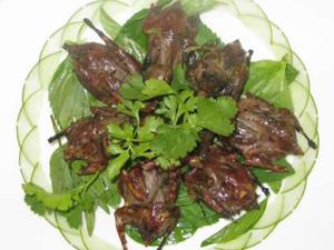 Chim mía Quảng Ngãi - iVIVU.com