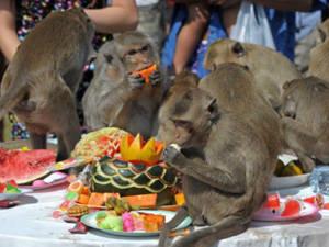 Lễ hội buffett cho khỉ - iVIVU.com