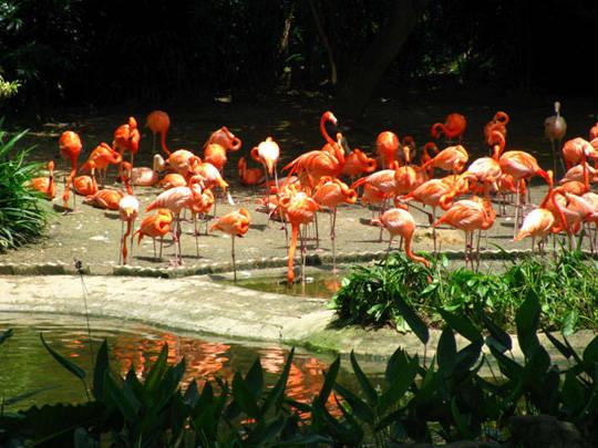 Vườn chim Jurong-iVIVU.com