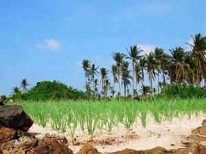 Du lịch Quảng Ngãi - đảo Lý Sơn - iVIVU.com