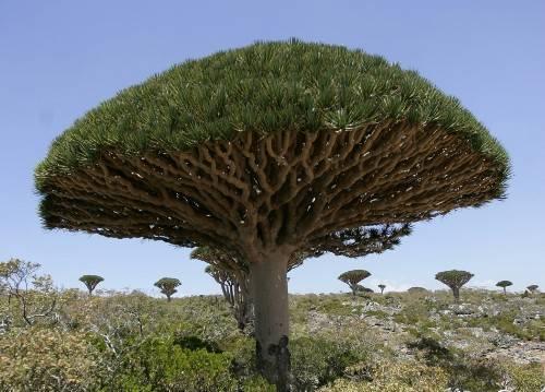 Du lịch Yemen - Vườn quốc gia Wadi Ayhaft - iVIVU.com