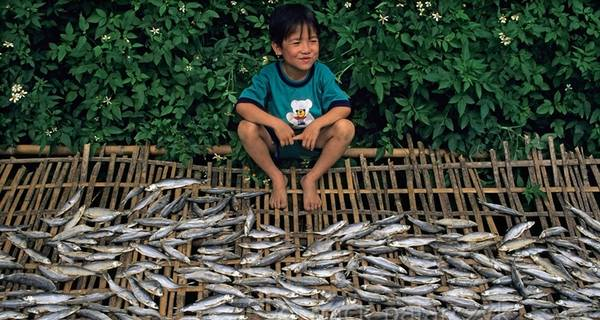 Cậu bé Tây Bắc ngồi canh chừng cá khô