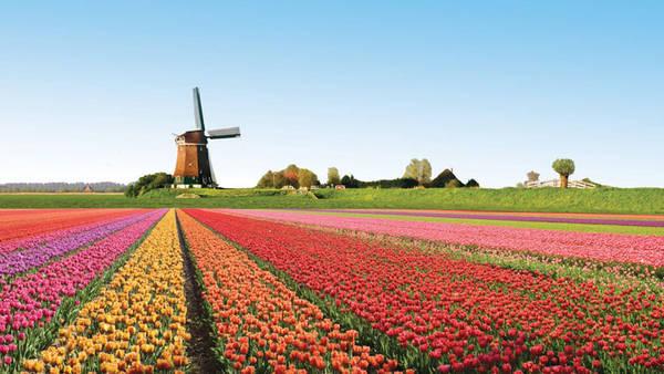 Du lịch Hà Lan - hoa tulip Keukenhof ở Lisse - iVIVU.com