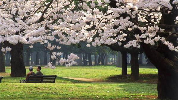 Du lịch Tokyo - Nhật Bản - Công viên Yoyogi - iVIVU.com