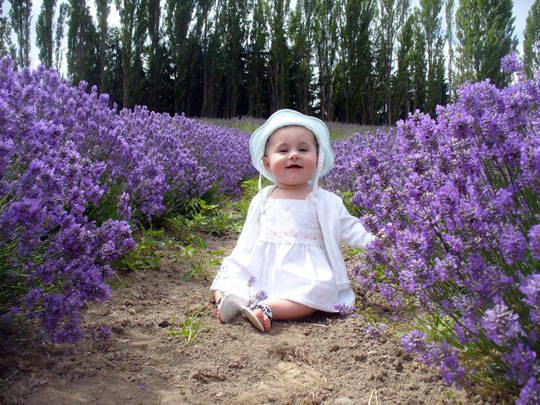 Du lịch Pháp - cánh đồng oải hương ở Provence 2 - iVIVU.com