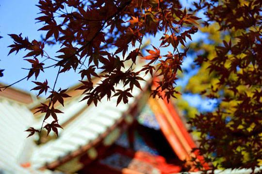 Du lịch Tokyo - Nhật Bản - Núi Takao - iVIVU.com