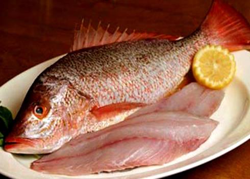 Đặc sản Cát Bà - cá hồng và cá giò - iVIVU.com