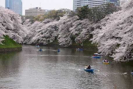 Sắc hoa anh đào nở rộ khắp Nhật Bản - Tokyo -2 - ivivu.com