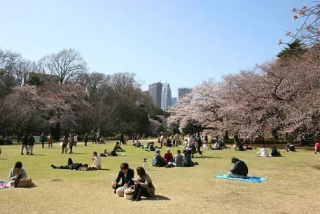 Sắc hoa anh đào nở rộ khắp Nhật Bản - Tokyo-5 - ivivu.com