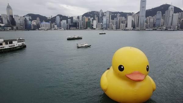 Vịt nhựa ở Hồng Kông - Cùng iVIVU