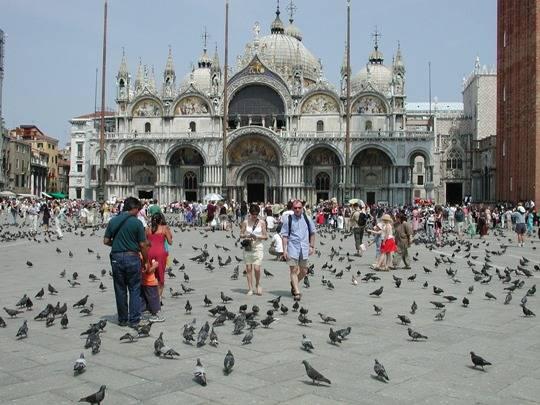 Cho bồ câu ăn ở quảng trường St. Mark, Venice, Ý là phạm pháp