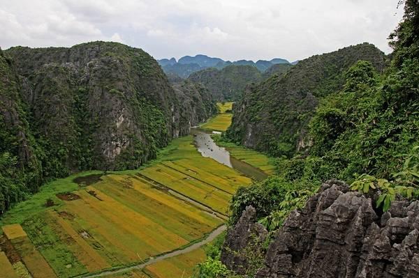 Vẻ đẹp của những cánh đồng lúa chín ở Tam Cốc nhìn từ trên cao.