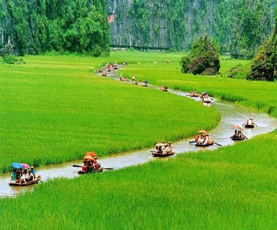 Chắc chắn, cảnh tượng khiến du khách ấn tượng nhất ở Tam Cốc là những cánh đồng lúa, đặc biệt là khi chúng có màu xanh tươi tốt và màu vàng của lúa chín.
