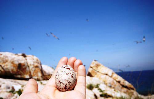 Và để sản sinh những quả trứng xinh xắn…