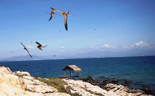Rồi từng đôi, rủ nhau bay trên nền trời, biển xanh…