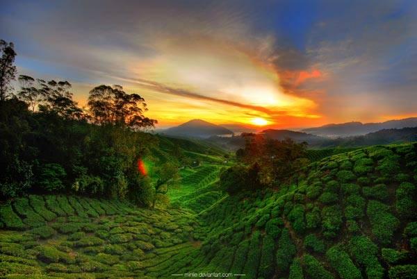 Cao nguyên Cameron mát mẻ quanh năm ở Malaysia