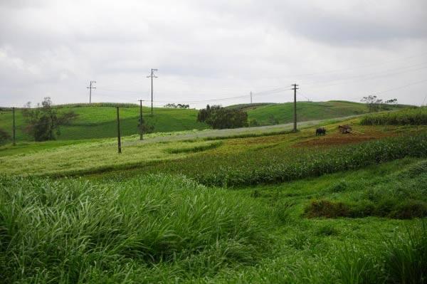 Những đồng cỏ non biếc xanh rợn chân trời khiến bạn ngây ngất