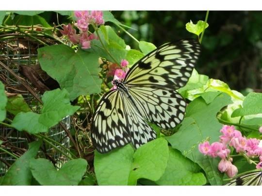 Công viên bướm và vương quốc côn trùng