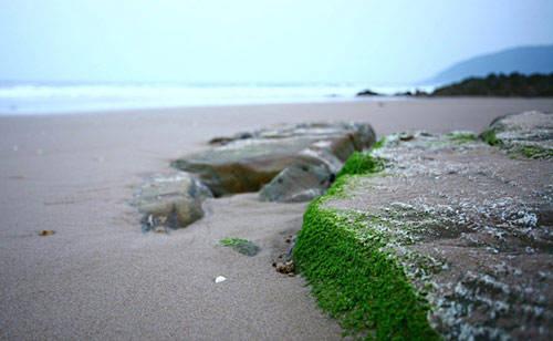 Bãi đá và những mảng rêu cũng lặng lẽ