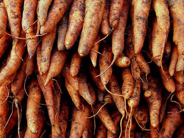 Củ cải đỏ.