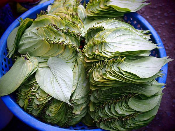 Lá trầu được sử dụng phổ biến ở Việt Nam. Những người lớn tuổi dùng để nhai. Số khác thì dùng để cuộn thịt bò nướng.
