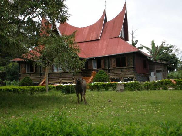 sumatra08