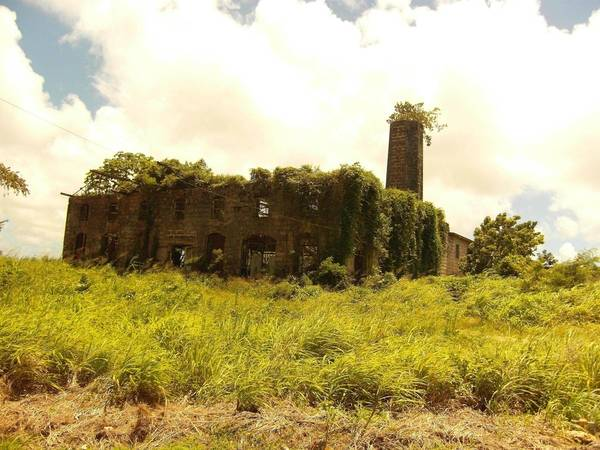 Nhà máy chưng cất rượu, Barbados