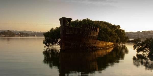 SS Ayrfield, vịnh Homebush, Australia