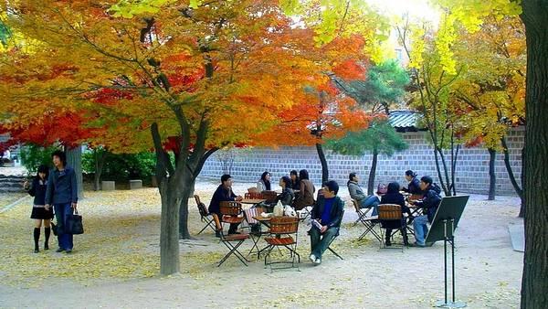 strolll_under_autumn