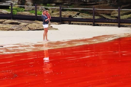 1. Thủy triều đỏ  Đây không phải là một phân cảnh trong Ghostbusters II. Hiện tượng thủy triều đỏ này xảy ra ở những khu vực tảo tích tụ.