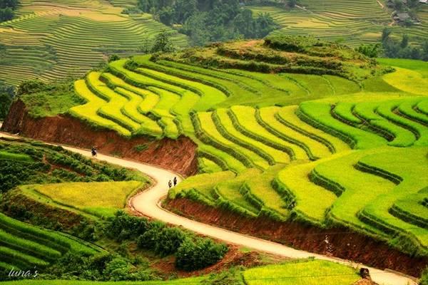 """Mùa thu hàng năm là """"thời điểm vàng"""" để đi du lịch Sapa để chiêm ngưỡng ruộng bậc thang vàng rực vào mùa lúa chín."""