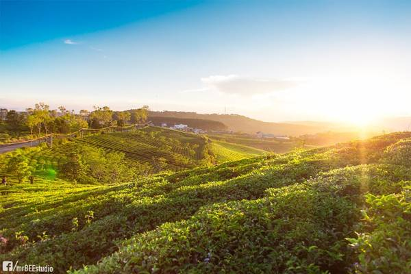 """Trải dài trên diện tích 230 ha, đồi chè Cầu Đất dễ khiến những tín đồ của màu xanh lá phải ngỡ ngàng trước cảnh sắc """"đất xanh ngắt, trời xanh trong"""". Ảnh: Linh Ly Thanh"""