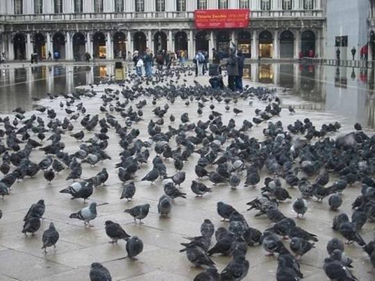 Du khách sẽ bị phạt rất nặng nếu cho chim bồ câu ăn tại quảng trường St. Mark thuộc thành phố Venice.
