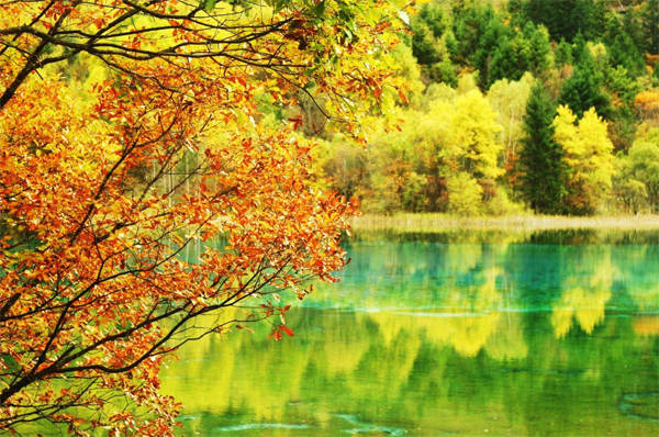 Đến Cửu Trại Châu mùa thuĐến Cửu Trại Châu mùa thu